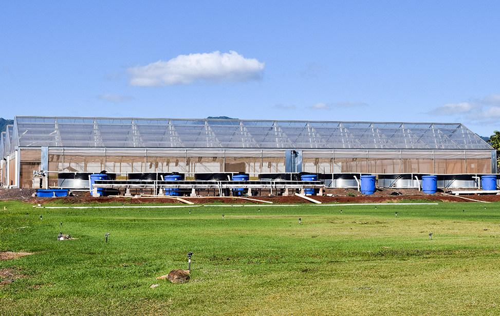 acniti-greenhouse-maris-garden-hawaii